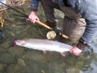 Steelhead Spey Fly Fishing Steelhead